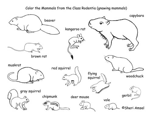 rodents coloring pages | Absecon Island Pest Control Exterminators NJ